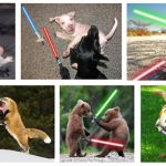 animaux star wars (1)