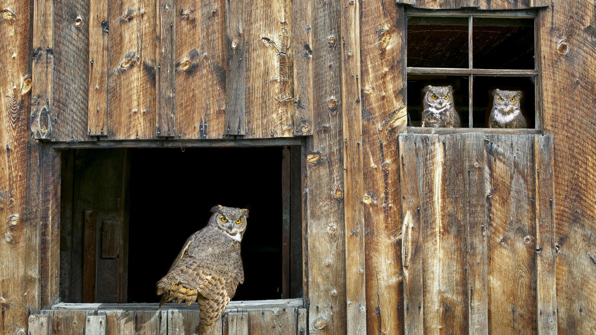 Magnifique sélection de photographies d'animaux