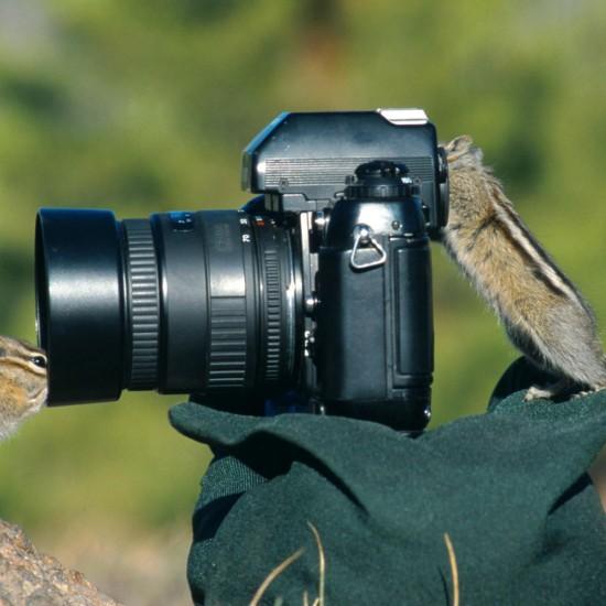 Magnifique sélection de photographies danimaux