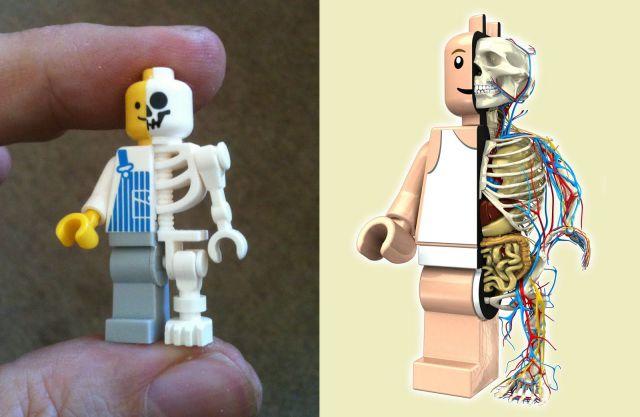Anatomie de nos jouets