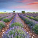 Dreamy Lavender