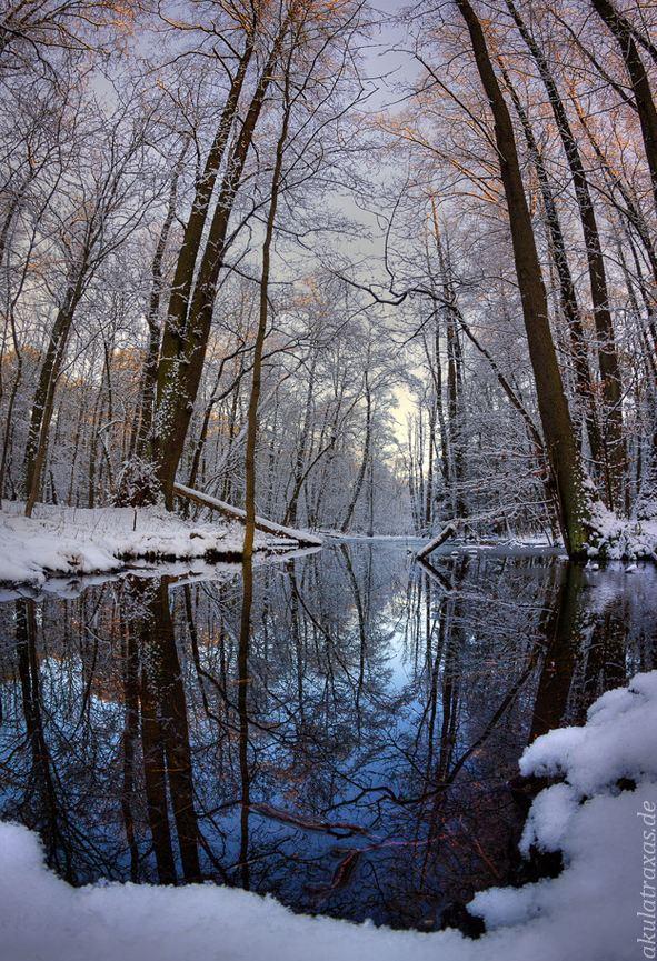 Photographie du jour #298 : Spandau-Forest
