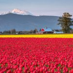 photographie-skagit-valley