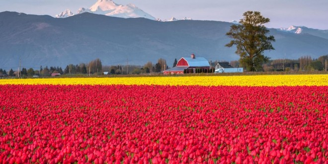 Photographie du jour #497 : Skagit Valley