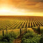 photographie-vallee-barossa-small
