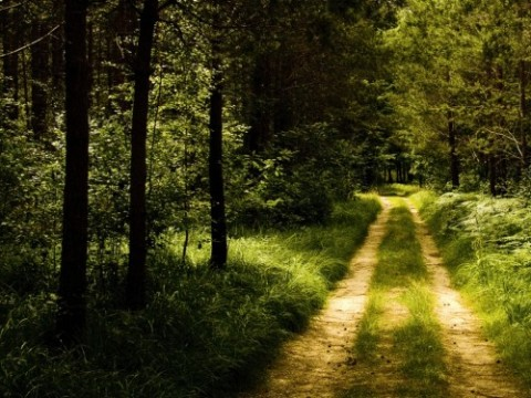 germany-forest-road-wallpaper