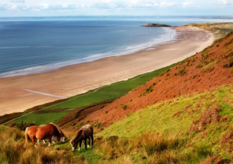 horses-at-rhossili-beach-gower