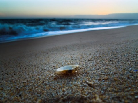 shell-on-the-sand