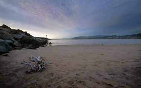 ventura-beach-driftwood