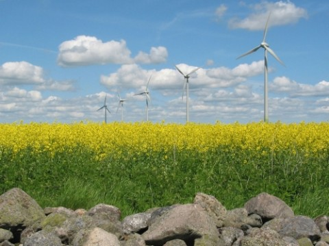 windmills-in-yellow-field