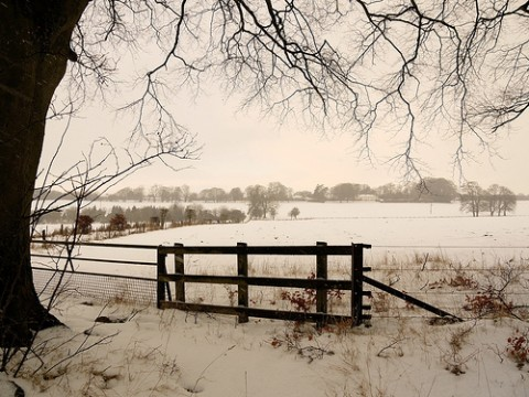 winter-landscape-near-dummer-