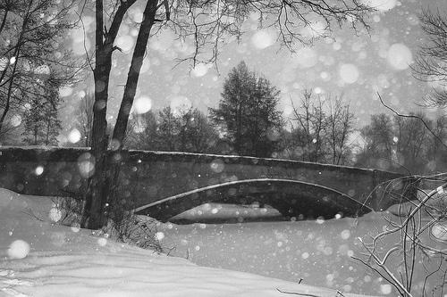 Photo of 71 Photographies D'hiver : une Évasion Blanche
