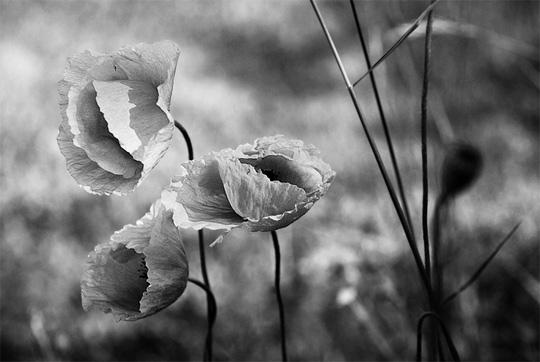 Belle Photographie de Nature en noir et blanc