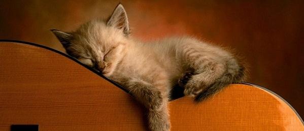 Kittens-10