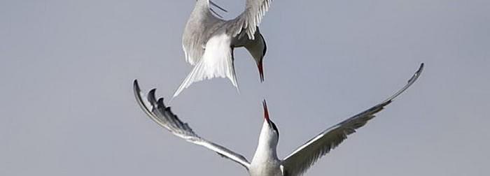 Photo of Fantastiques photographies d'amour entre les oiseaux