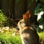 animaux droles (40)