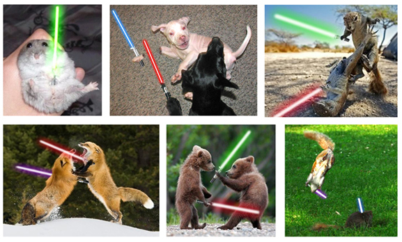 Photo of Quand les animaux se mettent à Star Wars