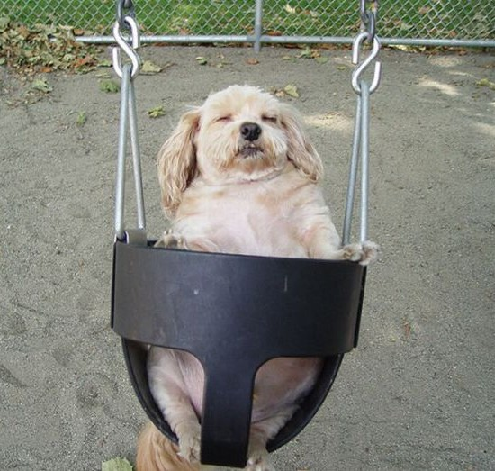 chiensbalançoire (22)