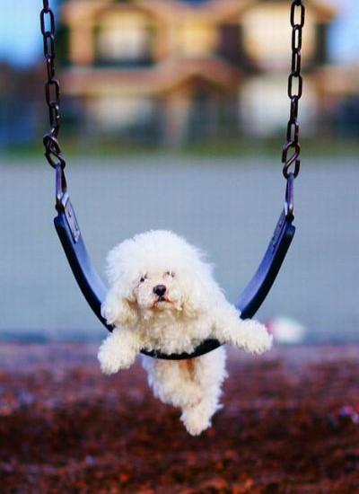 chiensbalançoire (3)