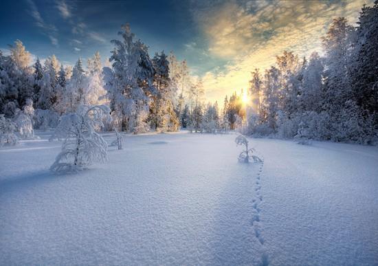 paysage (15)