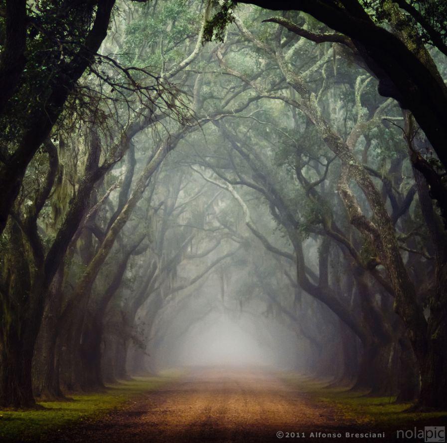 Photo of Photo du jour #55 : Louisiana Plantation