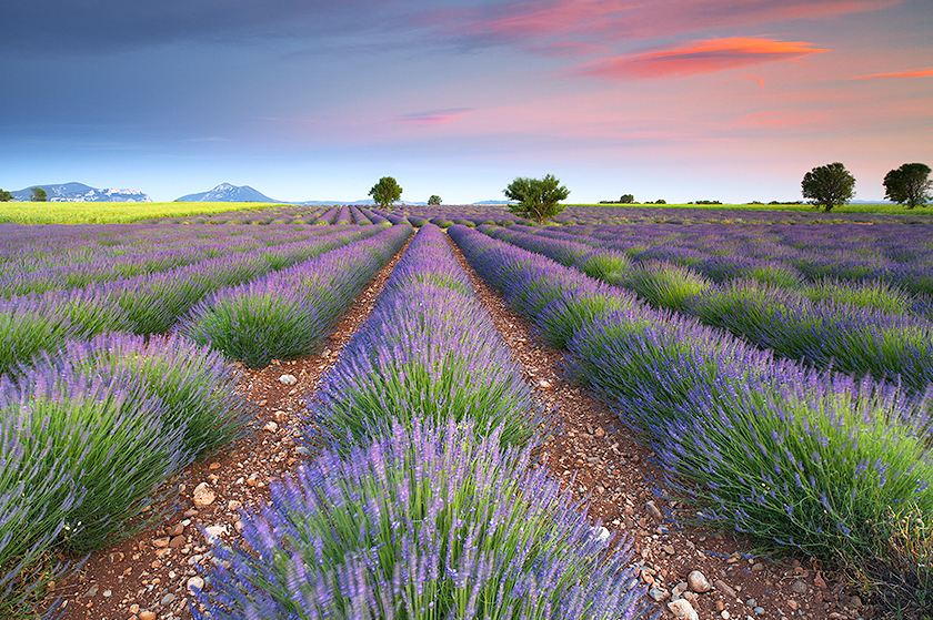 Photo of Photographie du week-end #37 : Dreamy Lavender