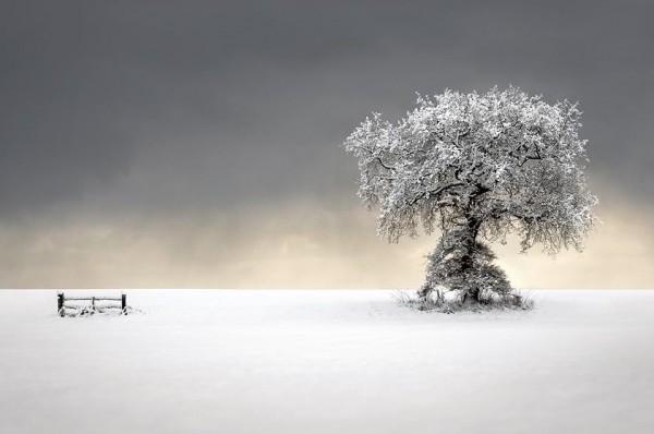 Winters Picnic par Liam Lrankland