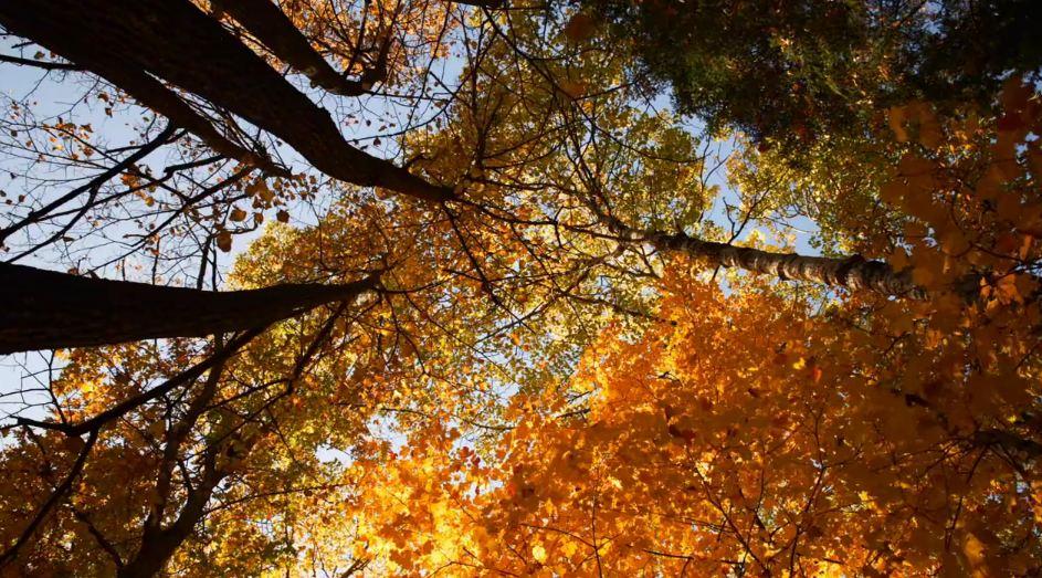 Photo of Time lapse de la forêt de Minnesota – Autumn Skies