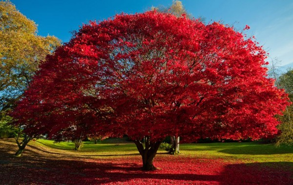 Photographie du jour #227 : Red Tree