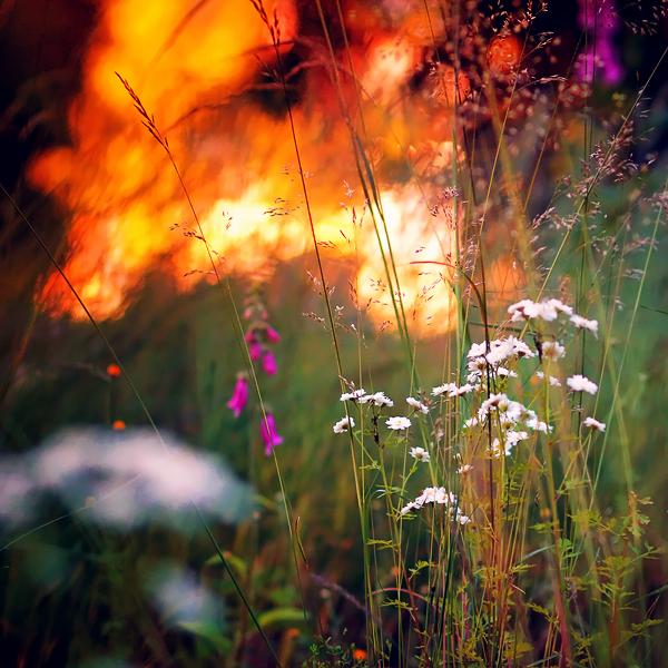 photographie-nature-Pawel-Matys  (11)