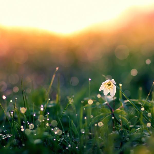 photographie-nature-Pawel-Matys  (12)