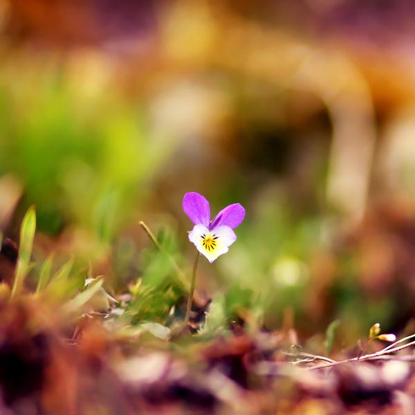 photographie-nature-Pawel-Matys  (15)