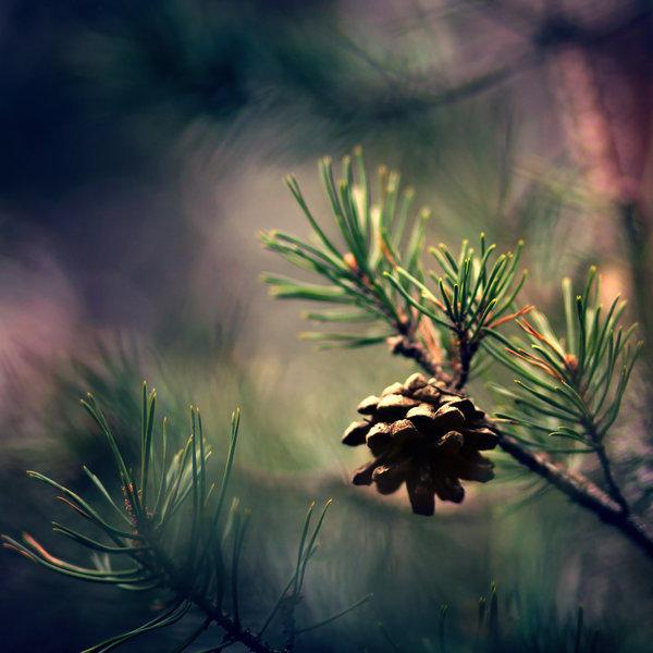 photographie-nature-Pawel-Matys  (18)