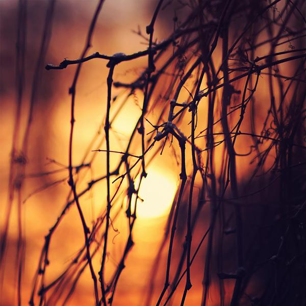 photographie-nature-Pawel-Matys  (19)