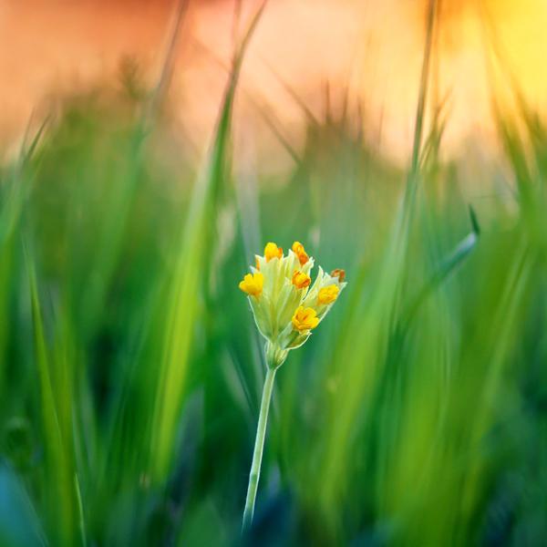 photographie-nature-Pawel-Matys  (2)