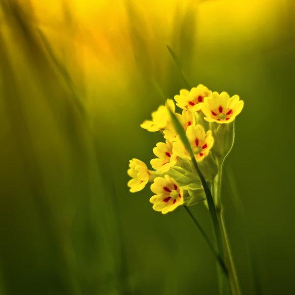 photographie-nature-Pawel-Matys  (20)