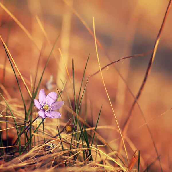 photographie-nature-Pawel-Matys  (4)