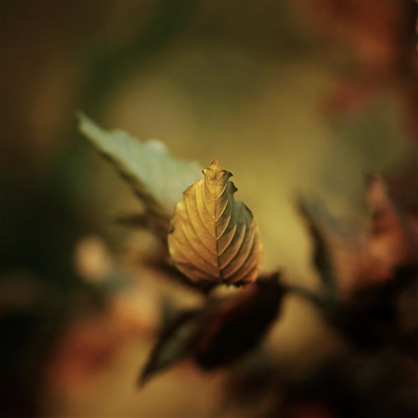 photographie-nature-Pawel-Matys  (6)