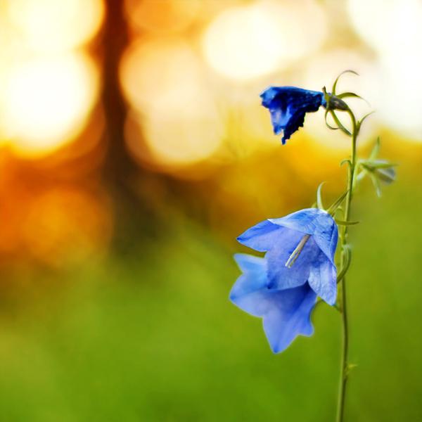 photographie-nature-Pawel-Matys  (7)