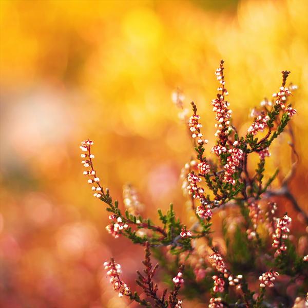 photographie-nature-Pawel-Matys  (8)