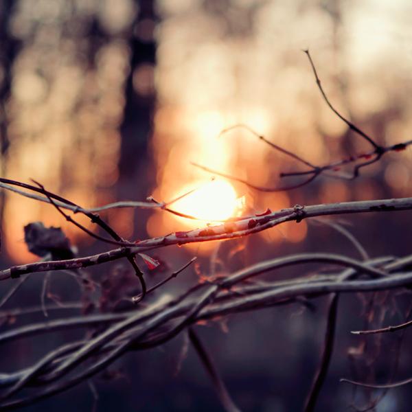 photographie-nature-Pawel-Matys  (9)