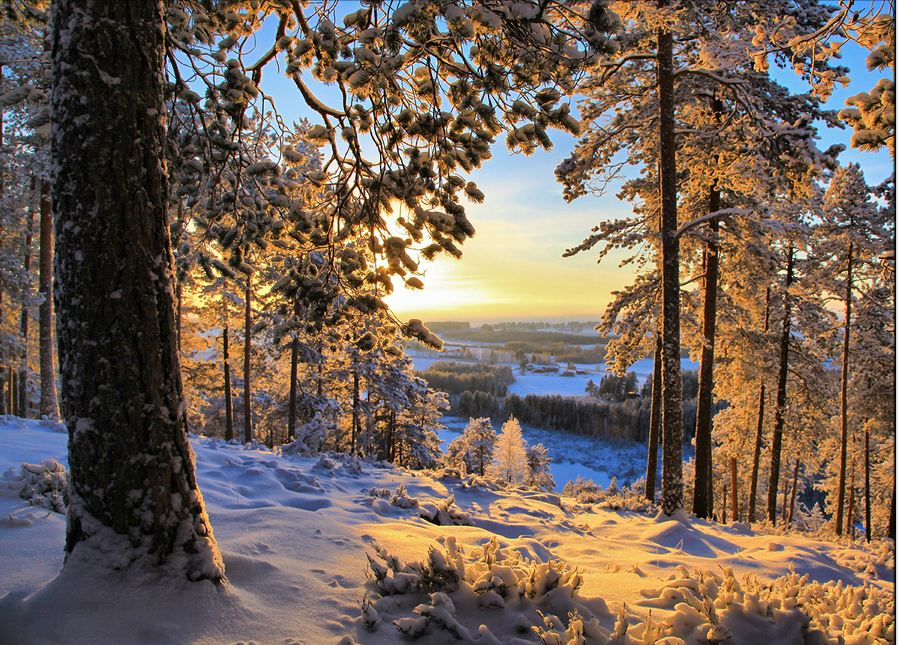 Winter Morning Finland