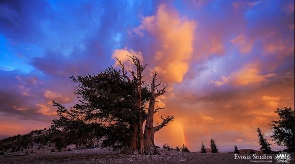 Time lapse du Parc national de Joshua Tree avec les Perséides