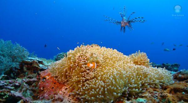 Wonders of the Sea - La beauté de nos fonds marins en vidéos