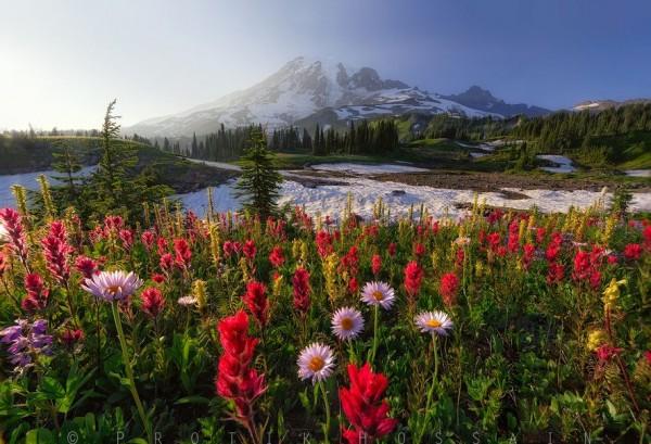 Photographie du jour #335 : Colors of joy