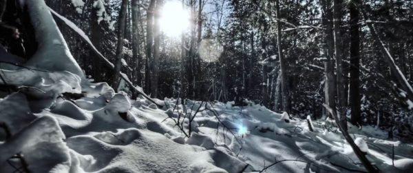 Time lapse de la forêt d'Haliburton - Ontario