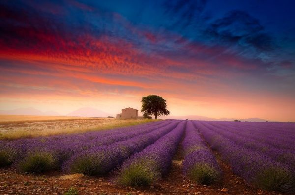 photographie-valensole