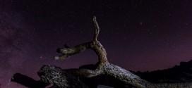 time-lapse-perseides-joshua-tree