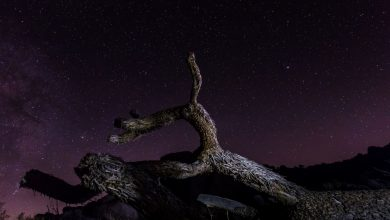 Photo of Les Perséides en time lapse depuis le Parc national de Joshua Tree