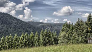 Photo of Time lapse du massif montagneux Forêt-Noire – Allemagne